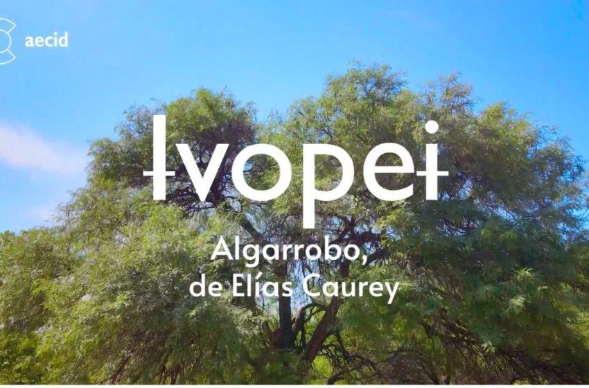 """Ɨvopeɨ – Algarrobo"""